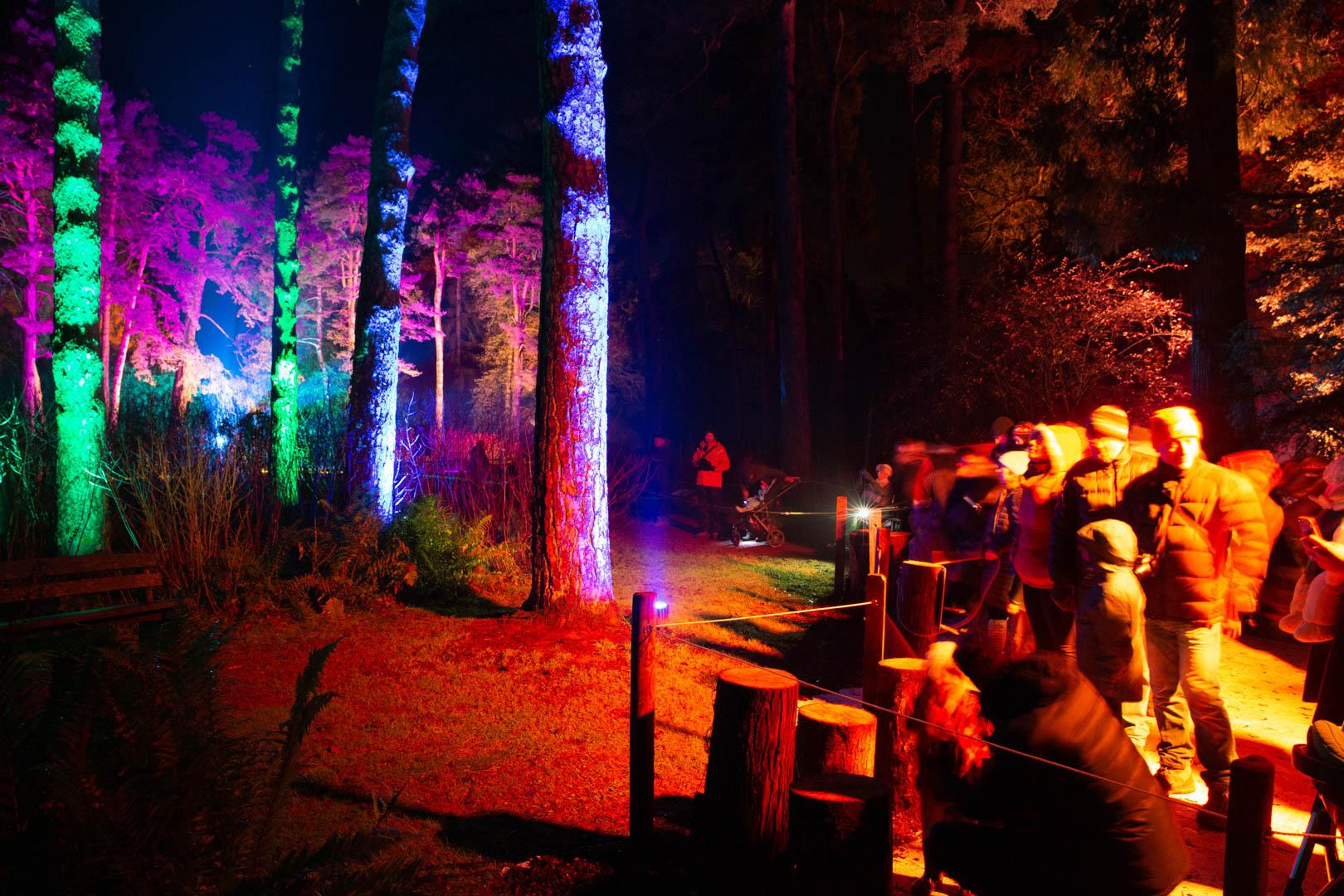 Westonbirt Enchanted Christmas Musical Logs